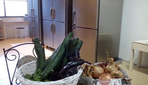 夏のお野菜を頂きました
