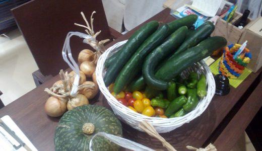 近所の方からお野菜を頂きました